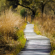 A wood pathway through a marshy forest