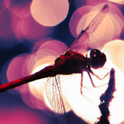 Dragonfly with lights behind it at night